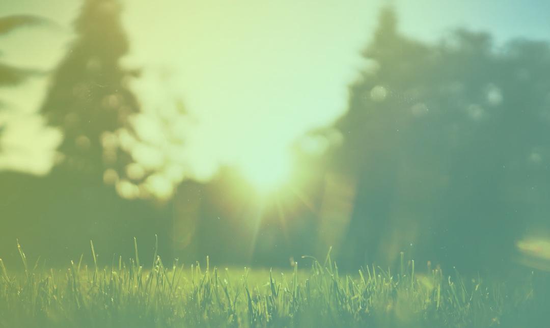 change the mind - Park image with sunshine
